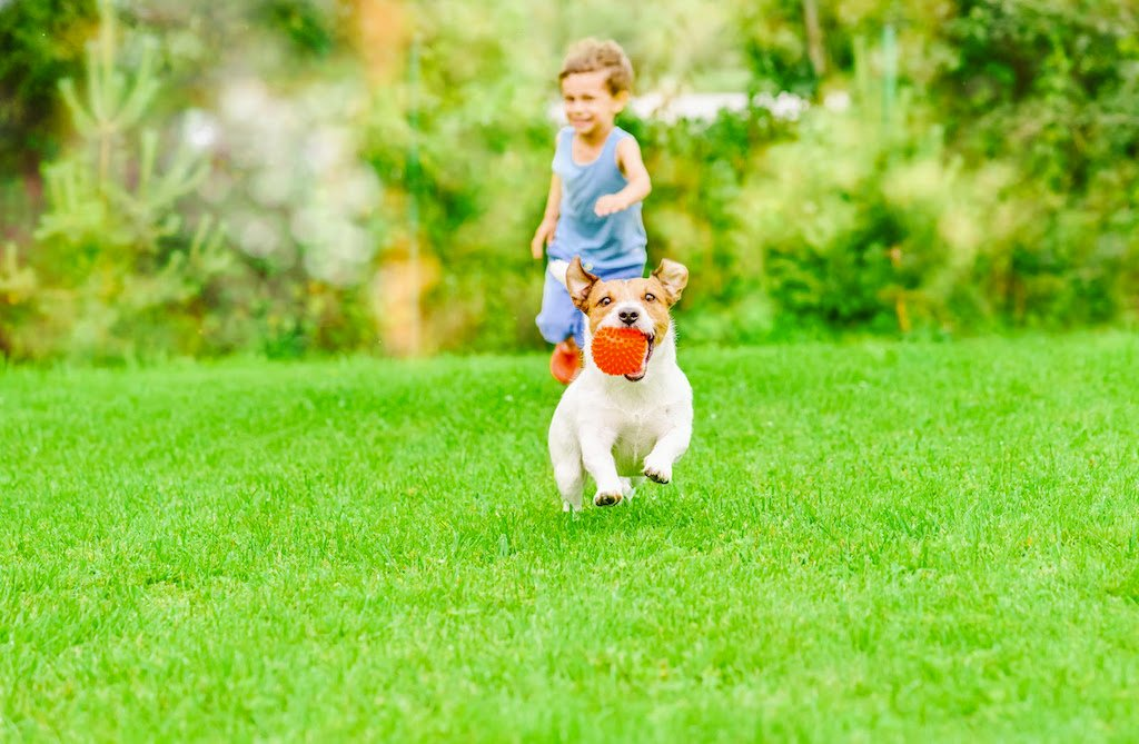 boy chasing dog on green sod